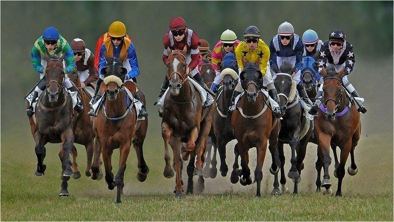Online wedden op paardenrennen - Waar kun je terecht? 2
